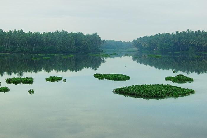 A shot of the Akkulam Lake and the lush greenery surrounding it