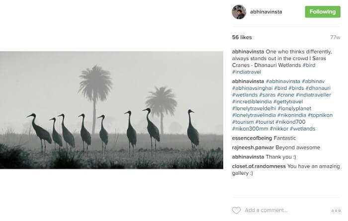 Cranes in Dhanauri wetlands in the morning