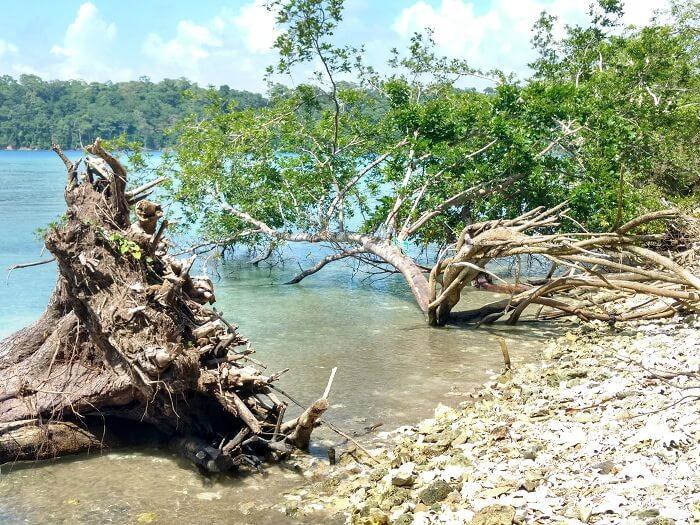 Beautiful Radhanagar beach in Andaman