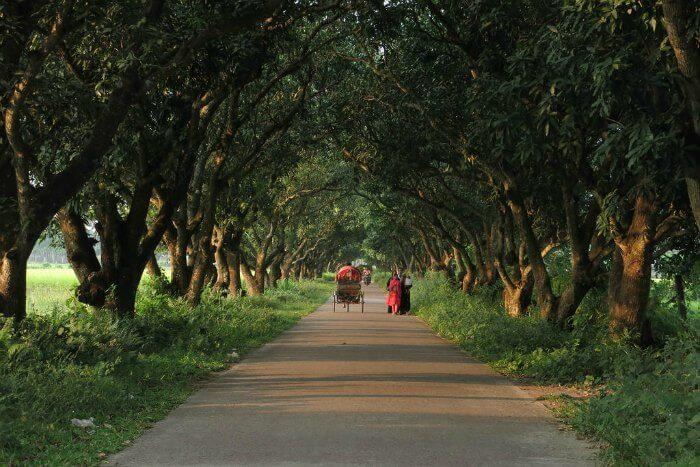 Drive to Bangladesh and have a fun road trip from India to Bangladesh
