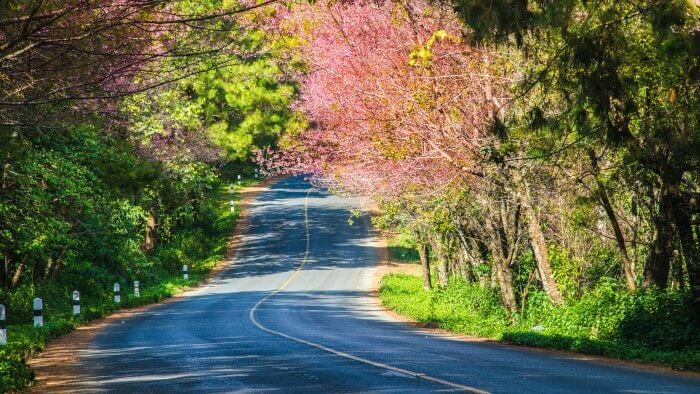 The smooth road to Thailand filled with colourful flowers and forests