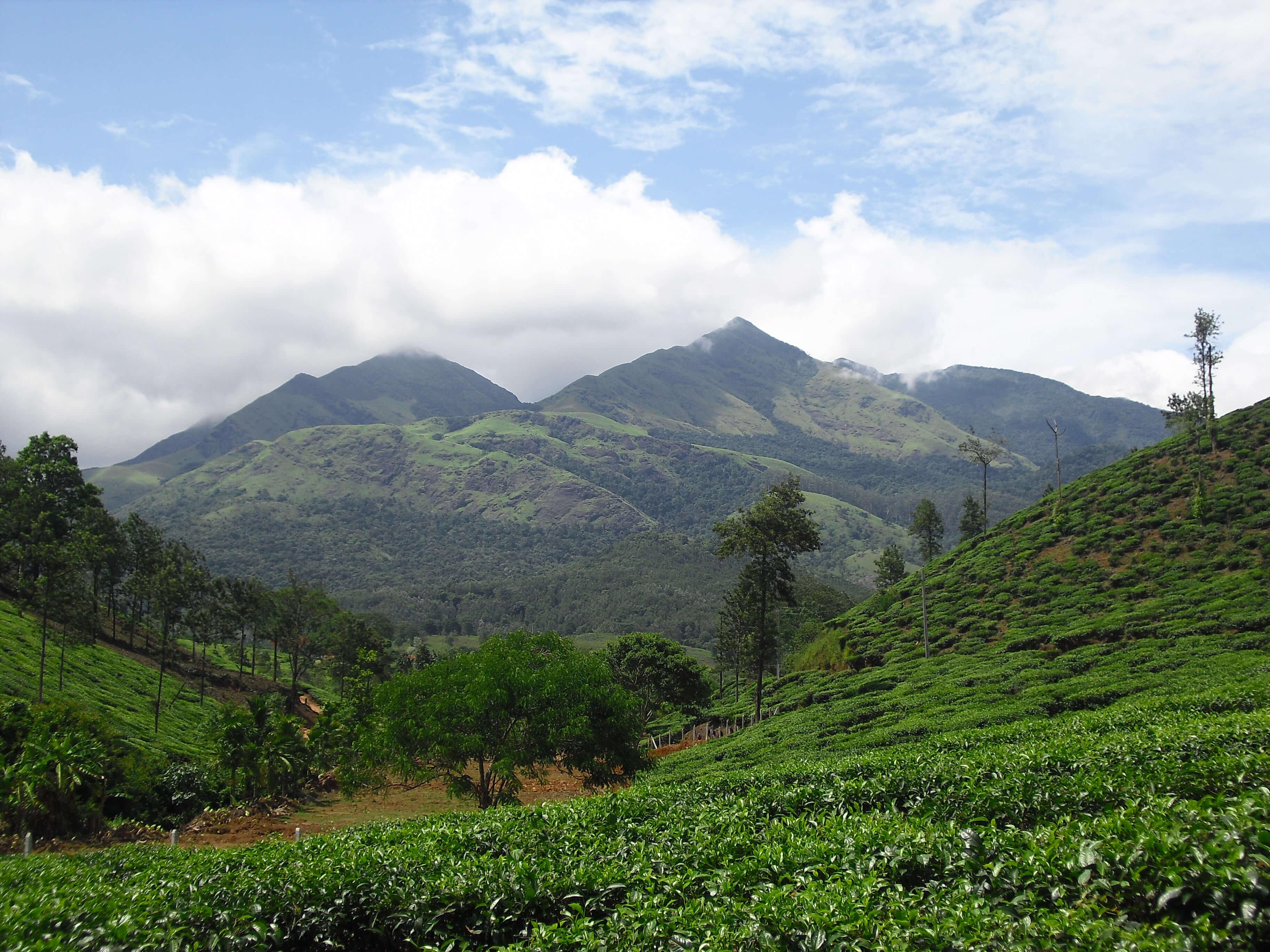 lush green mountains of Wayanad