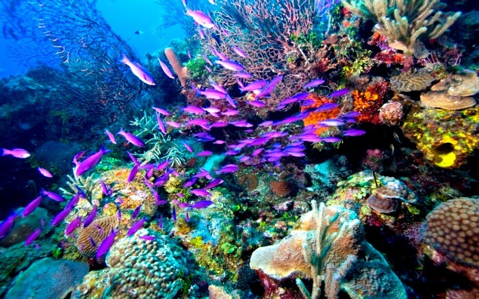 A colorful seabed with different corals and fishes