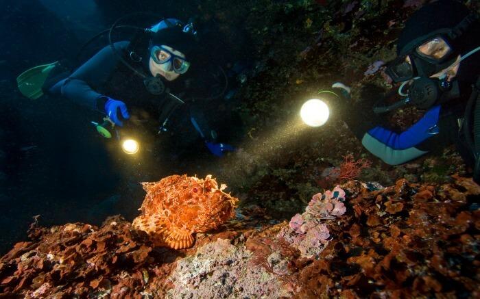 Scuba divers enjoying night diving
