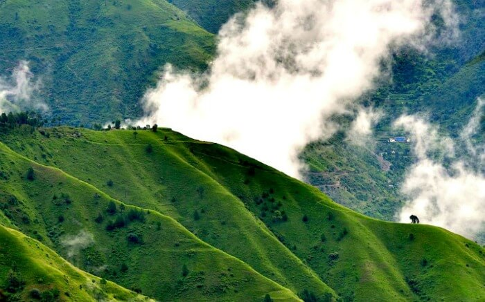 Cloud-kissed hill in Chail