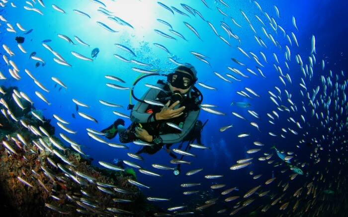A diver with school of fishes exploring the sea