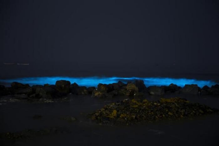 bioluminescence phenomenon witnesses in juhu beach in mumbai