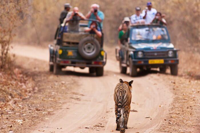 A scene from the Jim Corbett safari
