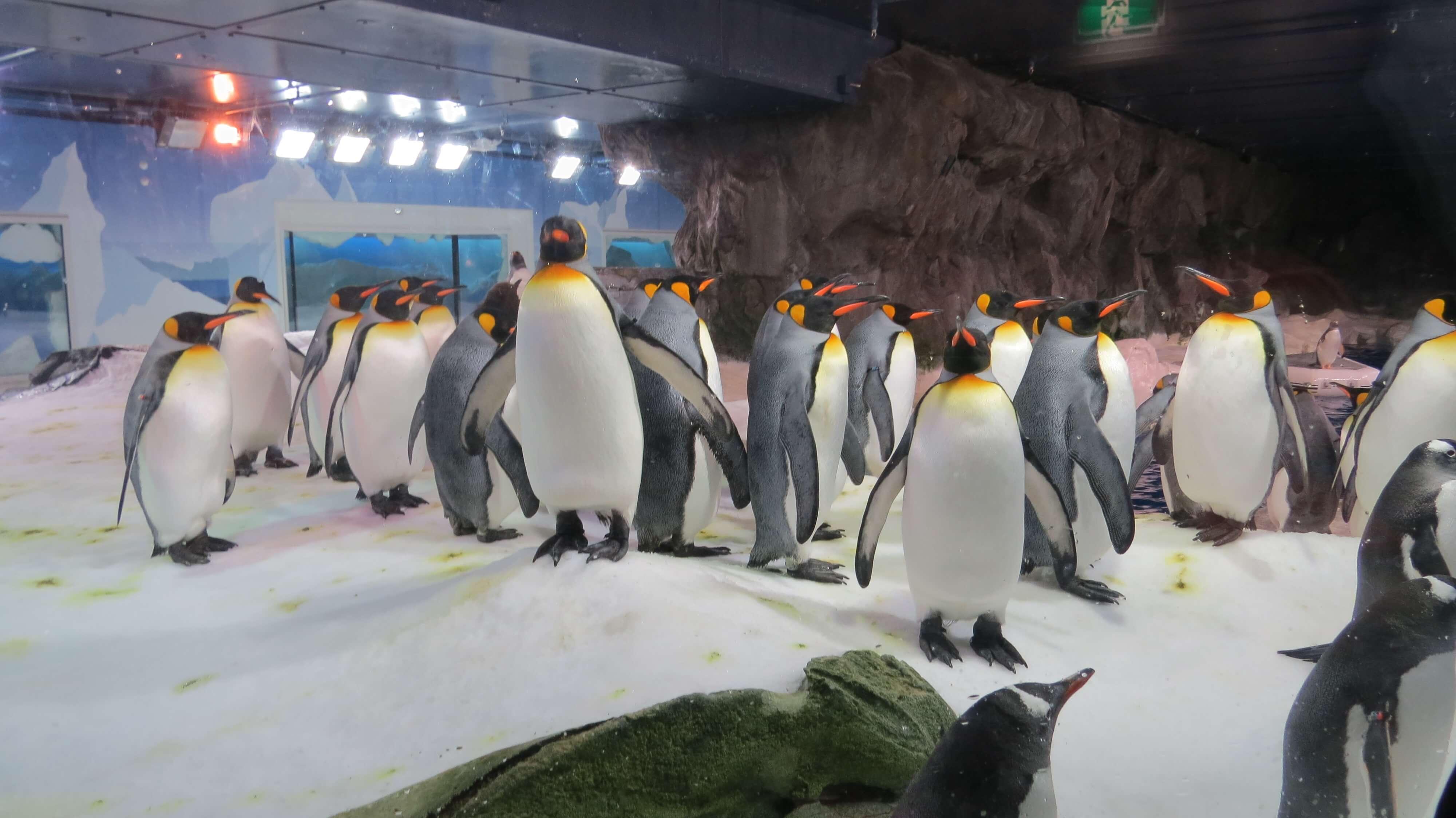 Penguins in Kelly Tarlton's Sea Life Aquarium