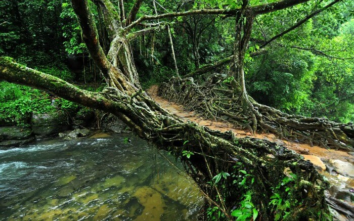 Living Root bridges near the Mawlynnong Village