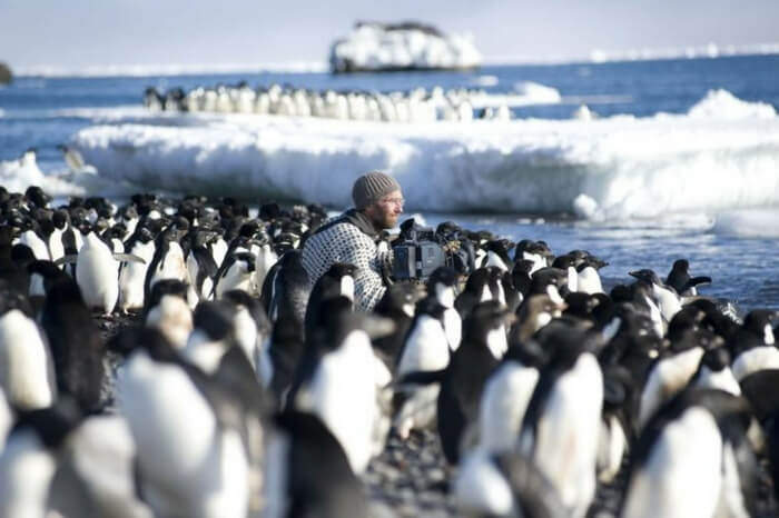 Traveler among penguins in a still from the travel documentary Frozen Planet