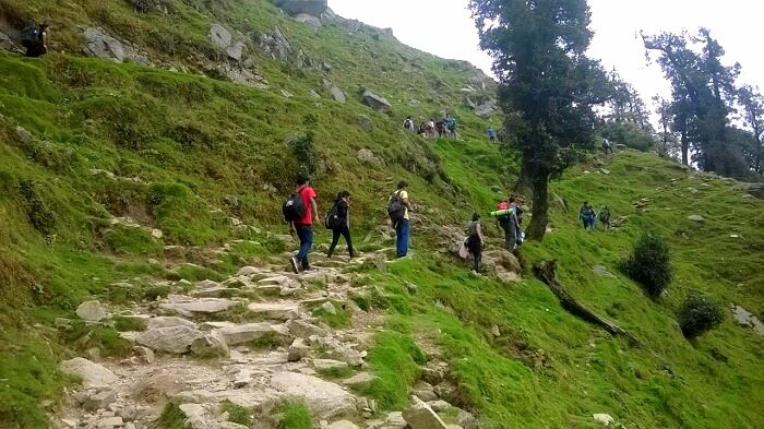 Mcleodganj to Triund trek