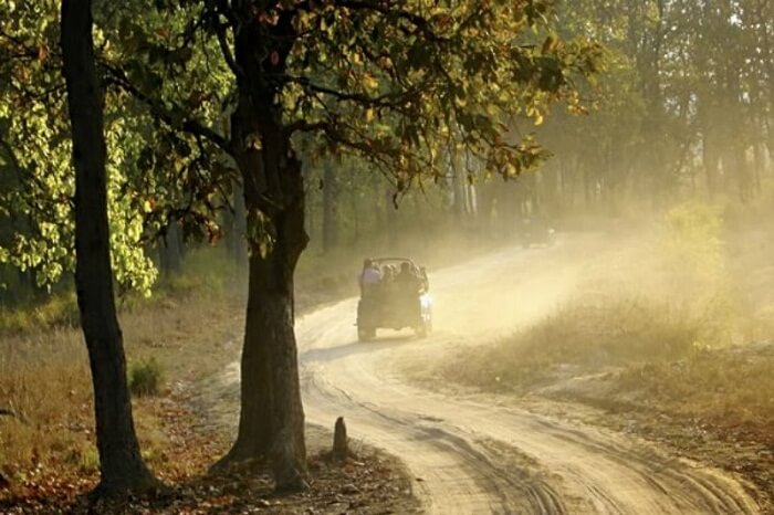 Tourists take a jeep safari through the Kodia Forest in Kanatal