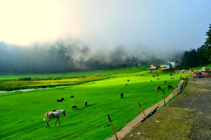 Beautiful morning in Khajjiar