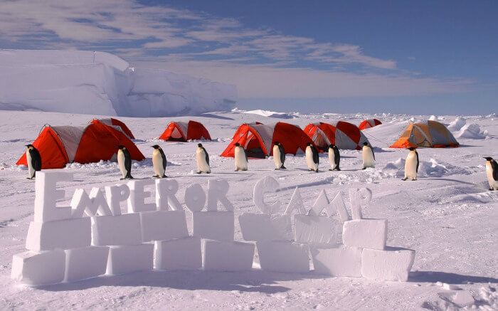 Penguins in Emperor Camp
