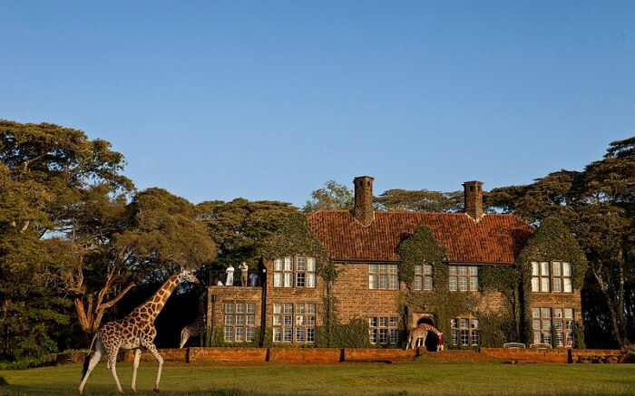 View of Giraffe Manor