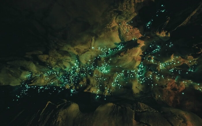 Glowworms inside the Waitomo Caves