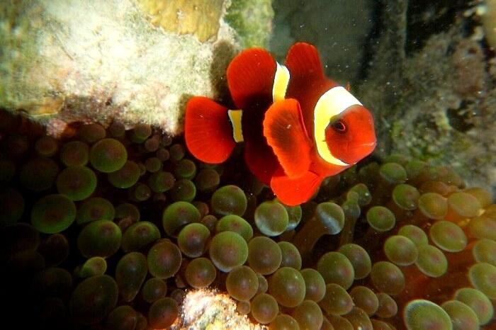 Exploring the marine life in Andaman