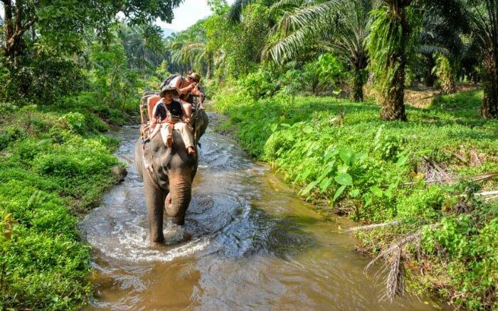 Elephant safari in Krabi