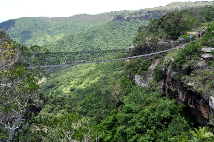The Oribi Gorge Swing Bridge in South Africa surrounded by dense forest