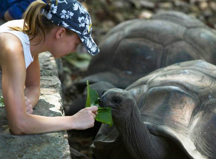 feed tortoises in seychelles