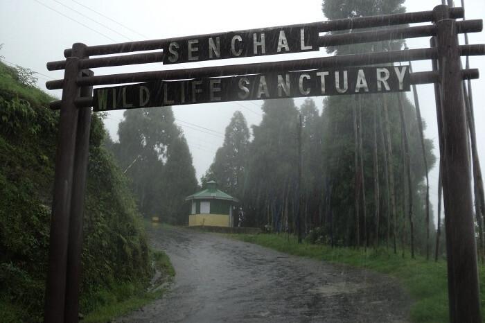 Senchal Wildlife Sanctuary Darjeeling