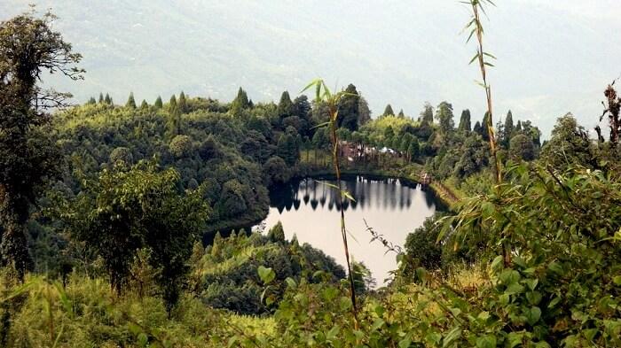 Forest Trail in Senchal Sanctuary Darjeeling