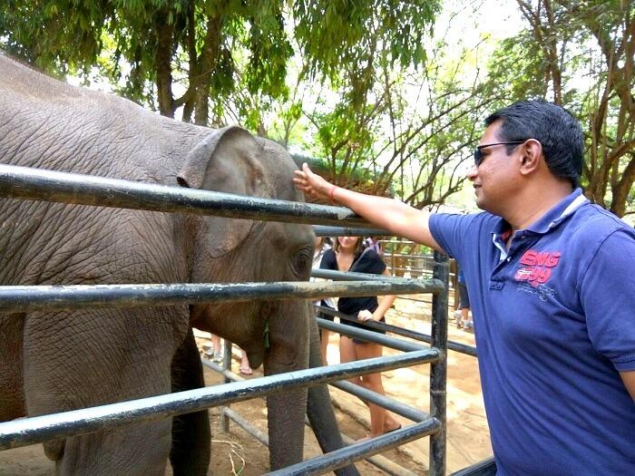 Family enjoying elephant feeding