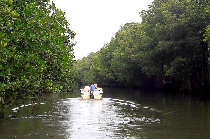 ride through the mangrove forest