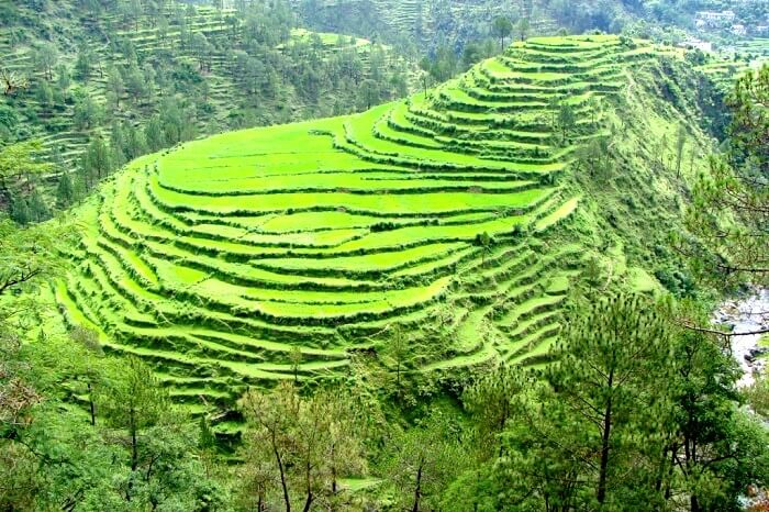 Step farming in Kausani