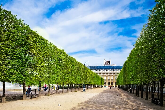 Sculpted trees alley in the garden of Palais Royal in Paris