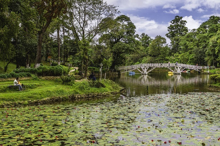 Lilly pond with flowers in bloom in a public park with a small wooden bridge in Shillong