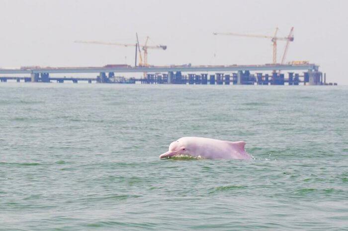 Dolphin watching in Tai O Village Hong Kong