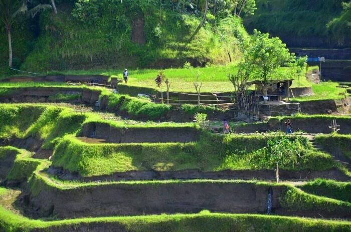 Greenery in Ubud