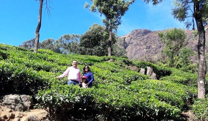 a visit to the beautiful tea plantations of munnar