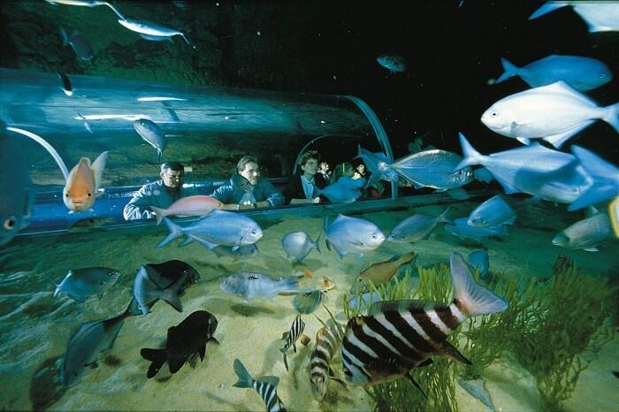 Tourists outside aan exhibit at the Kelly Tarlton Sea Life Aquarium
