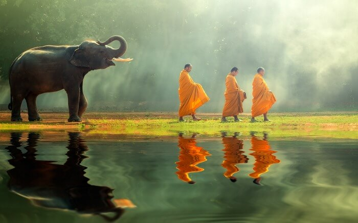 Elephant walking behind the monks