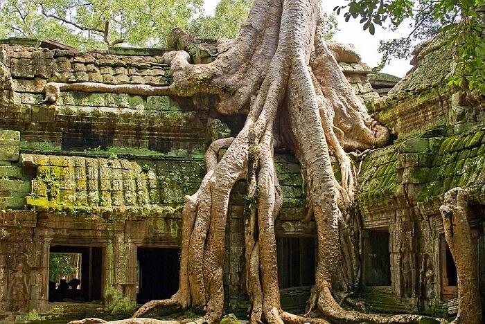 visit ta prohm, cambodia