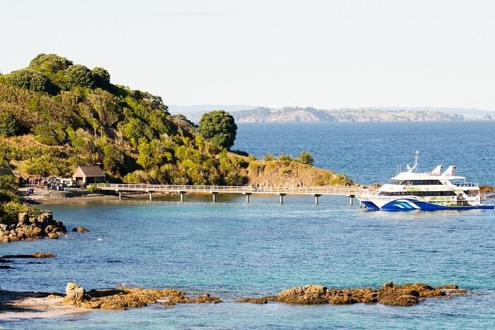 A cruise on a tour of the Tiritiri Matangi Wharf