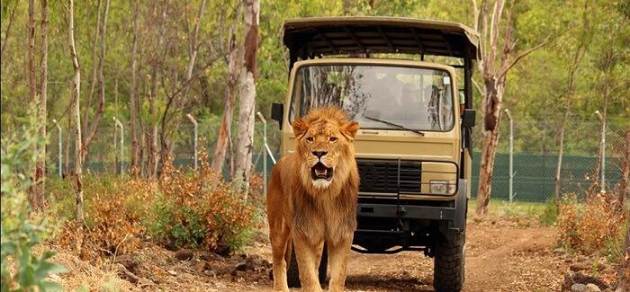 Drive thru in Casela Nature Park