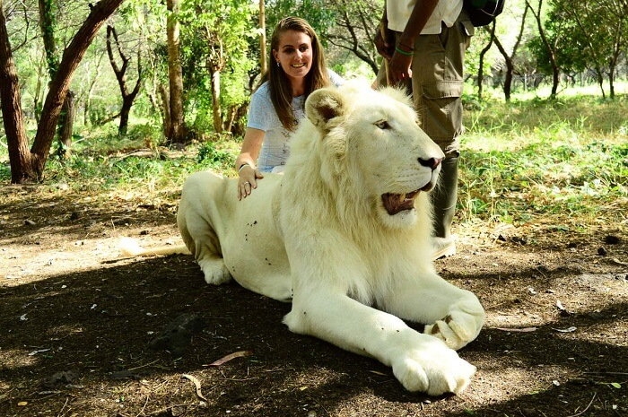 interaction with lions
