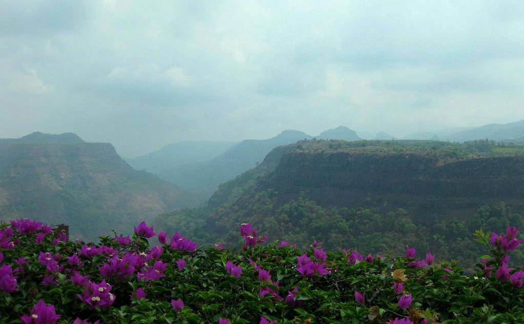 purple flowers on a valley in Khandala