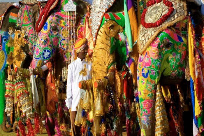 elephants painted for Jaipur elephant festival