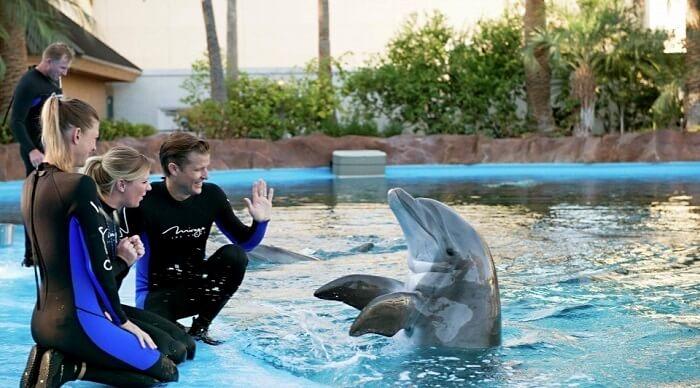 Secret Garden & Dolphin Habitat, Las Vegas