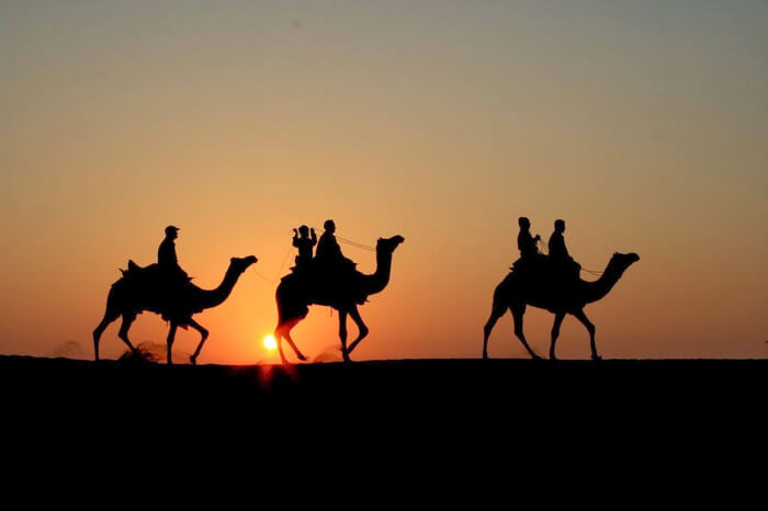 three camels in desert during sunset