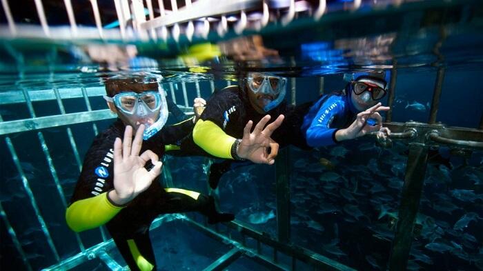 Couple enjoying cage snorkeling at Dubai Aquarium