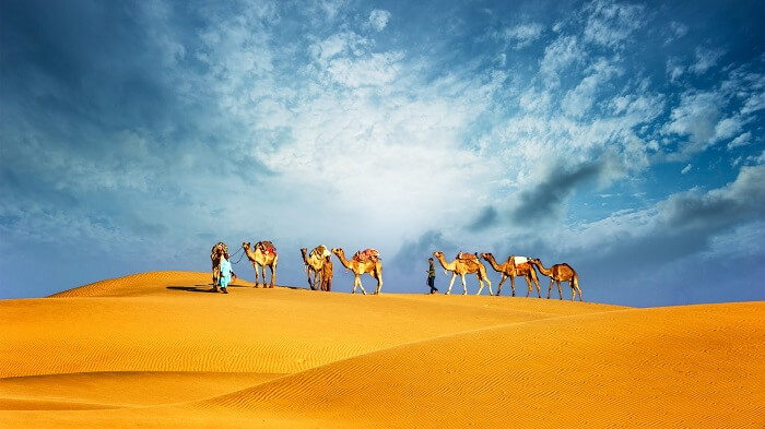 Camel Safari with Dinner in Dubai