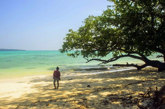 nature of havelock island