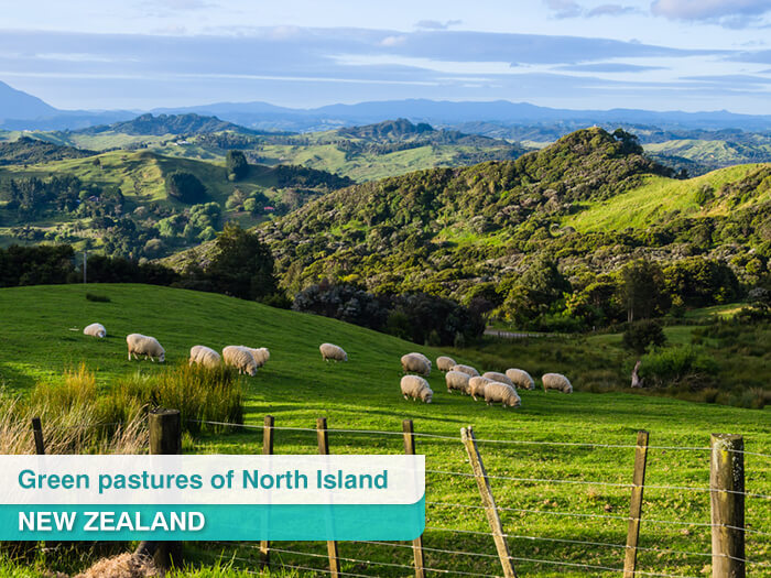 Green pastures of North Island, New Zealand