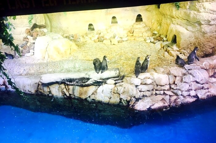 penguins on display in dubai
